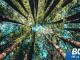 『大樹理論』:內容很短,道理很深。